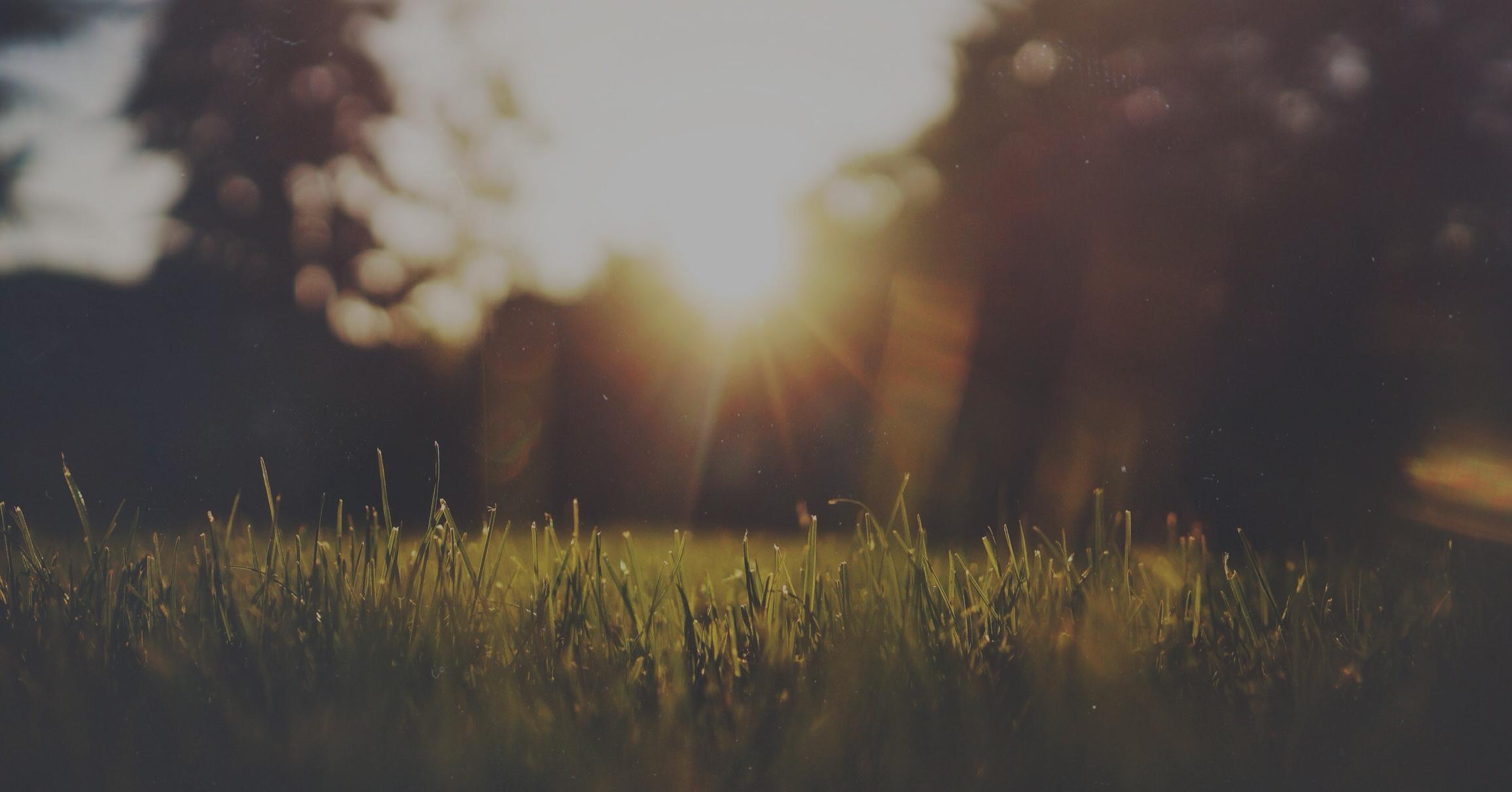dawn-dust-grass-2946